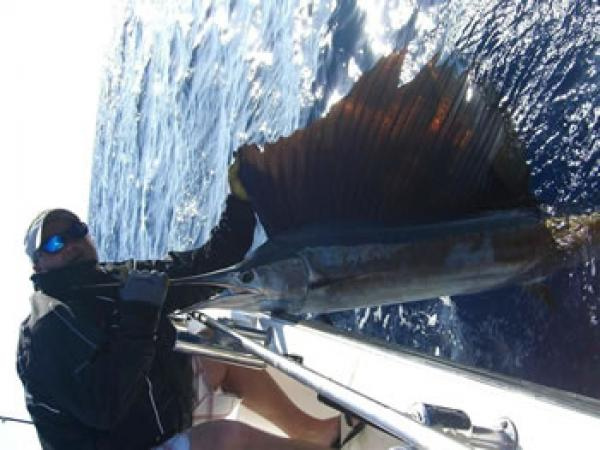 Matt Stahley-Sailfish