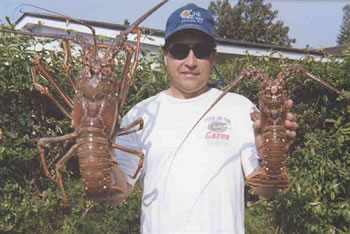Pek-Lake-Lobster